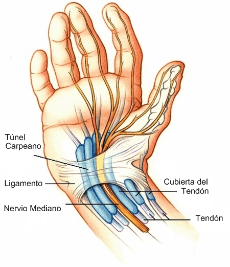 ama bonejoint handconditions lev20 thecarpaltunnel 01